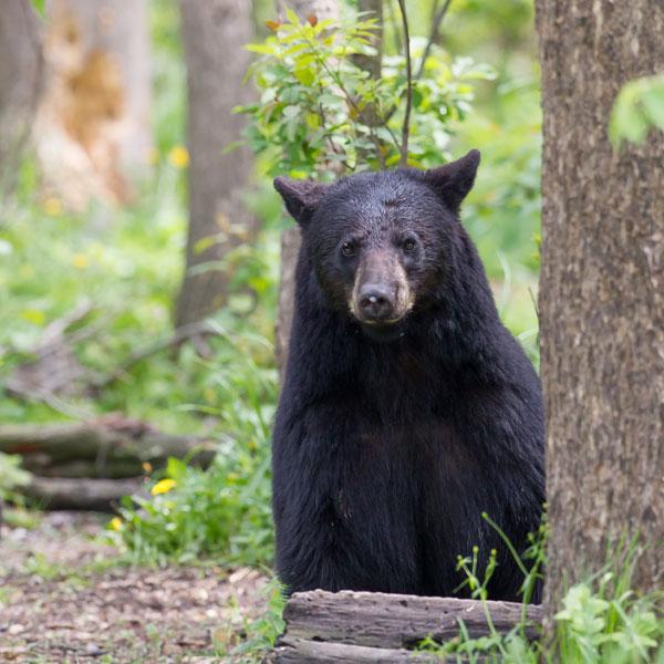 radium_bear